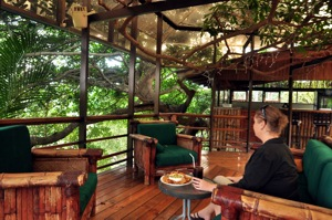 bar nestled in branches of ficus tree at Vista del Valle hotel,