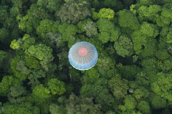Serendipity's balloons often fly over the forest.