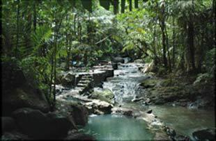 Jungle hot springs