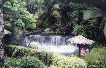 Tabacon Hot Springs is the biggest commercial hot springs near Arenal Volcano, catering to more than a thousand tourists a day.