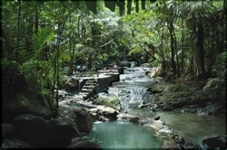 Serendipity's favorite hot springs in the jungle.