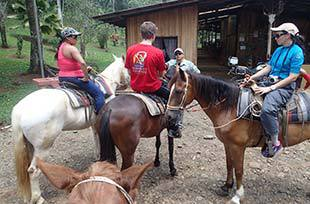 Horses ready to go on a ride
