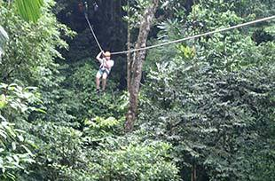 Zipping from tree to tree in rain forest